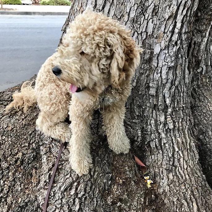She also like to climb trees
