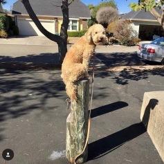 Gabby sitting on a pole